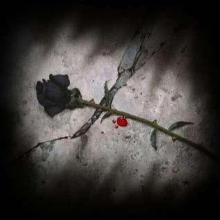 rose111.jpg